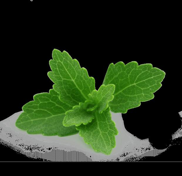 CNT Natural-Ingredients